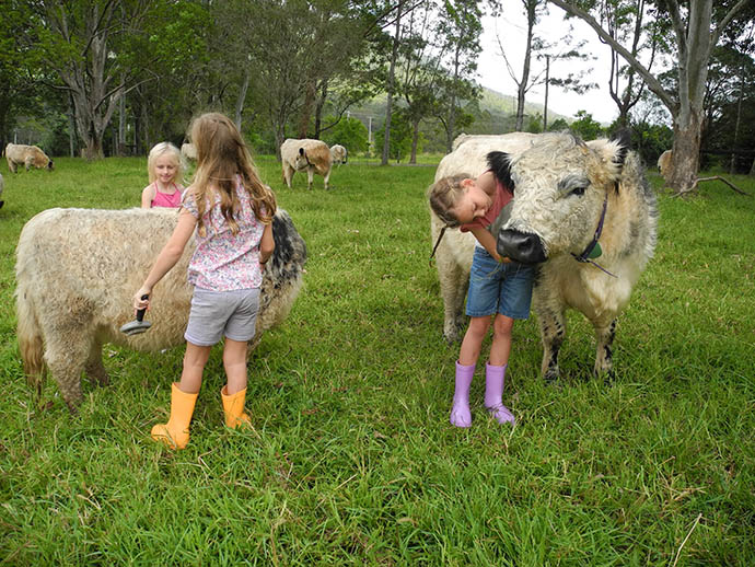 miniature_cattle_and_kids_2